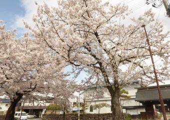 第65回入園式…平成30年4月11日(水)